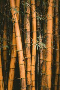Yellow Bamboo eco kade Contact us