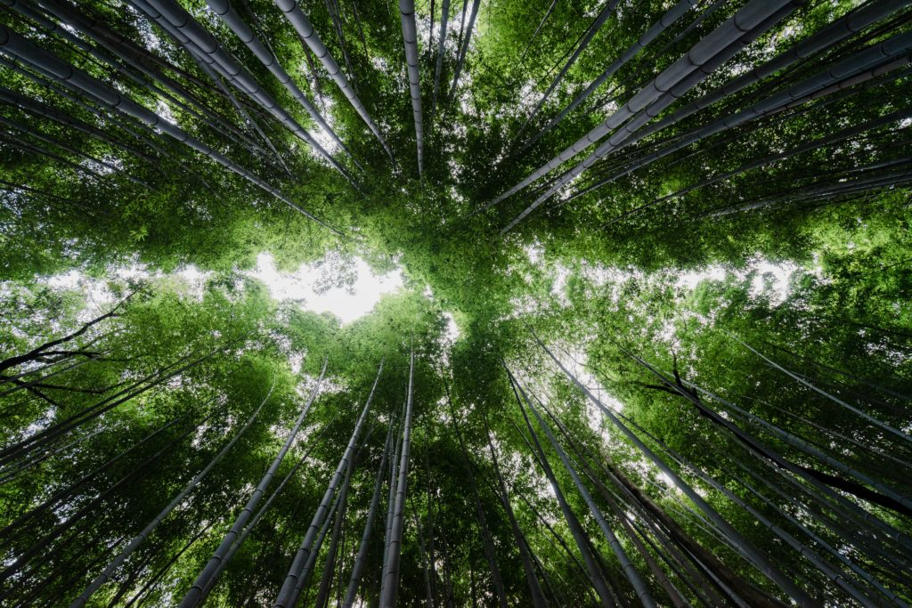Bamboo Forest an ecological wonder for Eco Kadé's Zero Waste Journey
